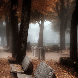 Dreamy Autumn by Astrid Pardew - City,  Street & Park  City Parks ( charm, dreamy, tuscany, bench, park, autumn, garden, misty )