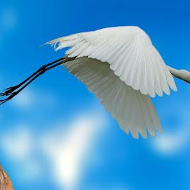 by Mukesh Chand Garg - Animals Birds ( upload )