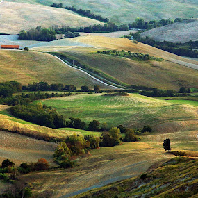 by Gregor Znidarsic - Landscapes Prairies, Meadows & Fields ( toscana, grass, colorful, sunset, colors, green, trees, yellow, shadows )