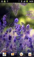 Screenshot of Lavender Live Wallpaper