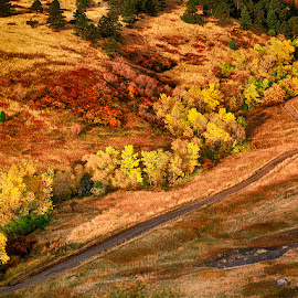 Bear Canyon - The Road Less Traveled,Boulder Mountain Parks,  Bo by Robert Castellino - Landscapes Forests ( the road appears less traveled as it extends up bear canyon next, path, nature, landscape )