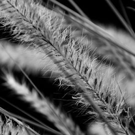 Still ... by Omar Santiago - Nature Up Close Leaves & Grasses