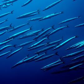 by Emanuele Pola - Animals Sea Creatures