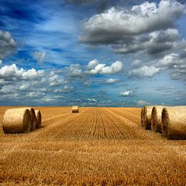 Alpacas de paja 12 by Eduardo Menendez Mejia - Landscapes Prairies, Meadows & Fields ( paja, tokina 12-24, cambridgeshire, madrid, hay, alpacas, menendez, eduardo, nikon, cambridge, d5100 )