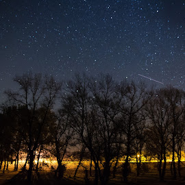 Stars and trees by Goran Matejin - Landscapes Forests ( stars, trees, night, forest )