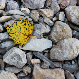 Yellow Sound by Vahid Delavar - Nature Up Close Rock & Stone ( blue sky, rock, yellow, leaf, earth )