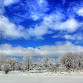 Blue Skies by Dawn Coen - Landscapes Weather ( clouds, blue, snow, trees, landscape, skies )