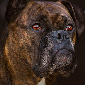 by Patrick Hayes - Animals - Dogs Portraits