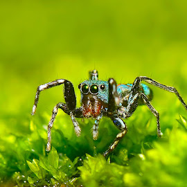 spider by Sunny Joseph - Animals Insects & Spiders