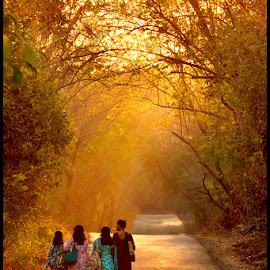 Golden rays  by Yogesh Waikul - City,  Street & Park  Street Scenes ( park, maharastra, india, nikon, golden )