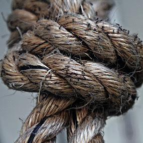 ants on a rope by Magdalena Wysoczanska - Artistic Objects Other Objects ( rope, art, ants, knot, close-up )