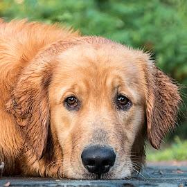 All Wet by Sue Matsunaga - Animals - Dogs Portraits