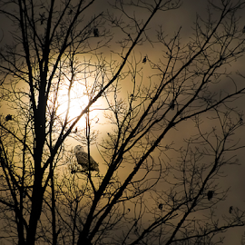 Twilight  by Susan Farris - Nature Up Close Trees & Bushes ( clouds, perched, tree, watching, twilight, owl, limbs, branches )