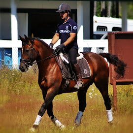 Dressage by Todd Bellamy - Sports & Fitness Other Sports