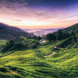 Cameron Highland Sunrise by Xicro Kuyon - Landscapes Sunsets & Sunrises ( field, hill, scenery, sunrise, landscapes, morning, plantation, inspired, inspirational )