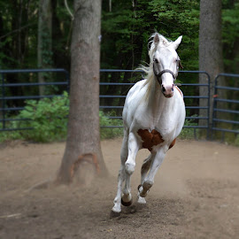 In a hurry by Susan Palmer - Novices Only Pets ( gallop, nature, canter, horse, livestock, animal )