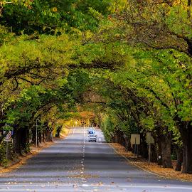 Walking through  by Edward Luong - City,  Street & Park  Street Scenes