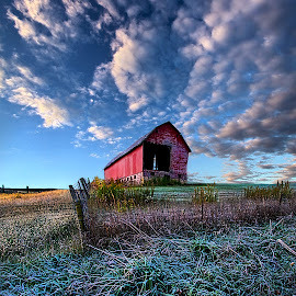 Nostalgia Blues by Phil Koch - Landscapes Prairies, Meadows & Fields ( vertical, photograph, frost, fine art, yellow, travel, leaves, crop, love, sky, tree, nature, autumn, flowers, light, flower, orange, twilight, agriculture, horizon, portrait, environment, dawn, season, serene, outdoors, trees, bar, floral, inspirational, natural light, wisconsin, ray, landscape, phil koch, spring, photography, sun, farm, blue sky, horizons, inspired, office, clouds, park, green, back light, scenic, morning, farming, shadows, wild flowers, field, red, blue, color, sunset, peace, fall, meadow, landscapephotography, beam, earth, sunrise, landscapes, hike, mist,  )