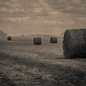 Country Fields by Jon Cody - Landscapes Prairies, Meadows & Fields ( field, farm, sepia, hay, country, fall, color, colorful, nature )