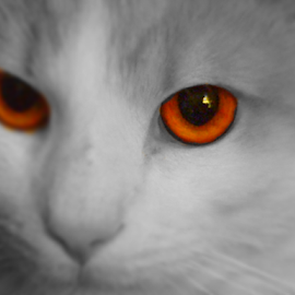 I No by Cecilia Sterling - Animals - Cats Portraits ( cat splash, kitten, feral cat, orange eye, halloween cat, selective color, pwc )