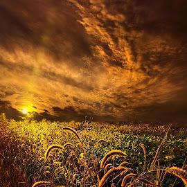 Time Everlasting by Phil Koch - Landscapes Prairies, Meadows & Fields ( ray, travel, landscape, sun, love, blue sky, sky, tree, nature, horizons, flowers, flower, clouds, park, seed, twilight, horizon, back light, bacl light, shadows, wild flowers, field, color, trees, landscapephotography, beam, sunrise, landscapes, mist,  )