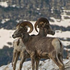 by Garrett Long - Novices Only Wildlife