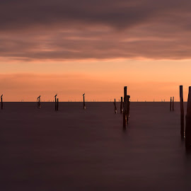 Fishing stakes by Kim  Schou - Digital Art Places ( maglehoej strand, sunset, nd, denmark, lolland, 10 stop )