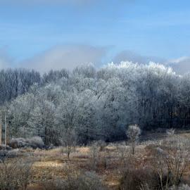 Across the Snowy Fields by DeDe PalmerWells - Landscapes Prairies, Meadows & Fields ( field, winter, wonderland, snow, frosty )