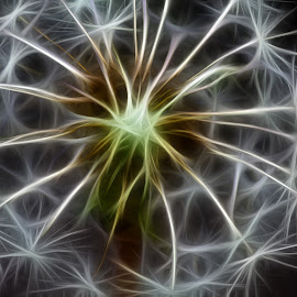 Fractured Dandelion by Branko Meic-Sidic - Abstract Macro ( abstract, macro, dandelion, fractal, flower )