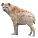 Hyena Sticker icon