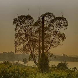 Pohon Cinta by Herry Cinyizz - Landscapes Prairies, Meadows & Fields ( #landscape #pohoncinta #indonesia #tangerangserpong )