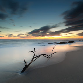 The Root by José Carlos Vieira - Landscapes Beaches ( viana do castelo )
