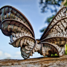 Creative Butterfly by Paulus Soegriemsingh - Artistic Objects Other Objects (  )
