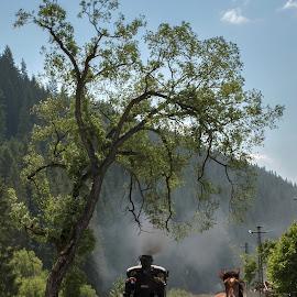 running free by Luciana Baboianu - Transportation Trains ( tourist, tree, hutulca, horse, mocanita, romania, running, moldova )
