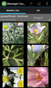 2350 SW Canada Wildflowers - screenshot