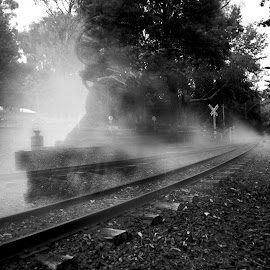 Ghost Train by Patrick Noone - Transportation Trains