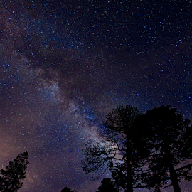 Milky way and trees by Cristobal Garciaferro Rubio - Landscapes Starscapes