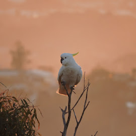 Morning by Fiona Rob - Animals Birds ( bird, branch, view, landscape, leaves )