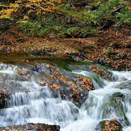 Fall Stream by Susan Hutchinson - Nature Up Close Water ( waterfall, fall, nature up close,  )