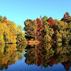 Pond with Autumn Color by Steve Munford - Landscapes Waterscapes ( sabot, color, autumn, waterscape, pond )