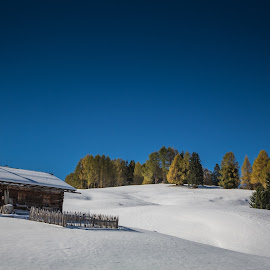 Early Snow by Eva Lechner - Landscapes Prairies, Meadows & Fields ( south tyrol, snow, dolomites, october, alpe di siusi, winter, cold )