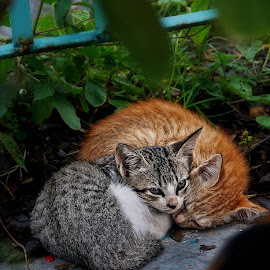 by Daniel Chang - Animals - Cats Kittens
