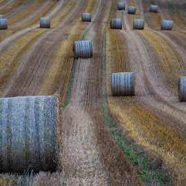 Field by John Einar Sandvand - Landscapes Prairies, Meadows & Fields
