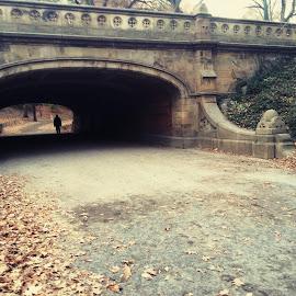 stranger by Sammo Sarkar - City,  Street & Park  City Parks ( life, nature, park, beautiful, street, plants, trees, leaves, path, landscape )