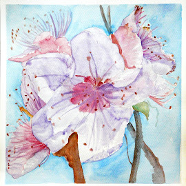 Spring by Artica Arta - Painting All Painting ( watercolor, colorism, transparent, flower )