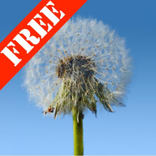 Dandelions Free Live Wallpaper