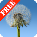 Dandelions Free Live Wallpaper icon
