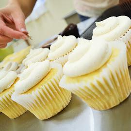 Cupcakes by Jennifer Schweitzer-Bell - Food & Drink Candy & Dessert ( bakery, cupcakes, dessert )