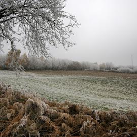 Frozen meadow by Stjepan Valjak - Landscapes Prairies, Meadows & Fields ( field, winter, nature, meadow, prairie,  )