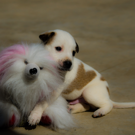 The friendship - Dobby & Snowy by Sam's 1 Shot - Animals - Dogs Puppies ( the friendship dog & doll   dobby & snowy, baby, young, animal )